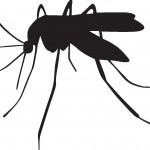 デング熱 感染拡大 症状と対策 2回目以降は危険