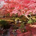 六義園 2014東京の紅葉の名所、見頃・ライトアップはいつ?