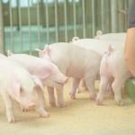 ふるさと納税 特産品人気ランキング 肉 豚肉編