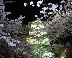弘前公園 桜 弘前さくら祭り