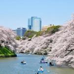 千鳥ケ淵の桜の花見と千代田のさくらまつり2016、混雑回避おすすめルートは?